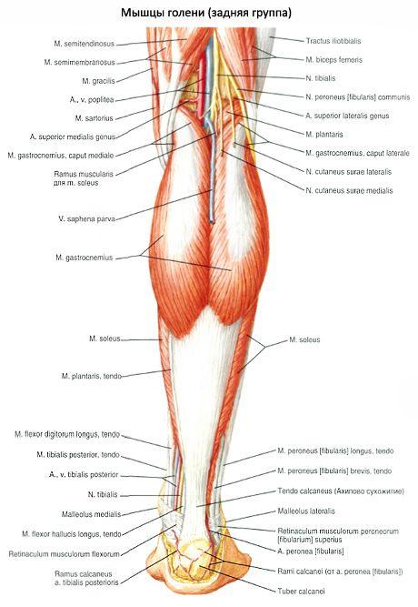 A peronealis ideg neuropathiája