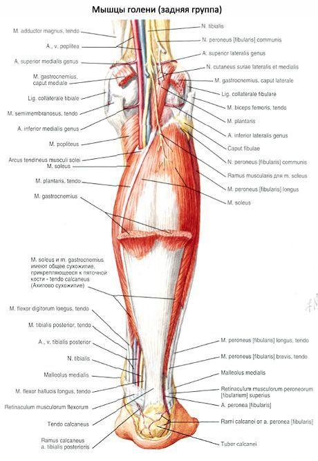 peroneális ideg súlycsökkenés)