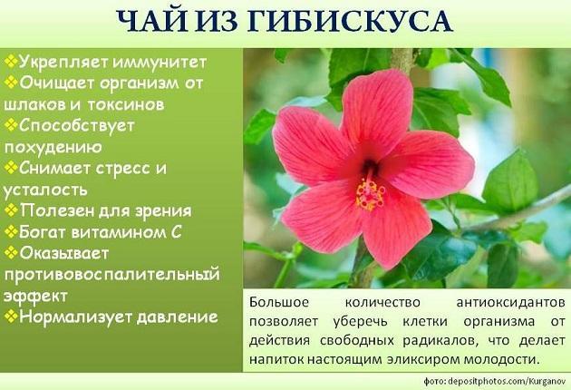 hibiszkusz ital fogyás)