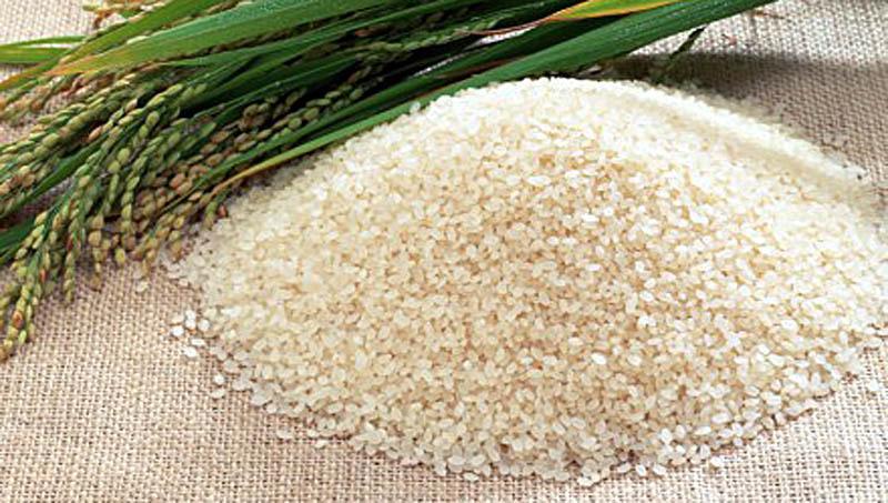szia kukorica fogyás veszteség indukció