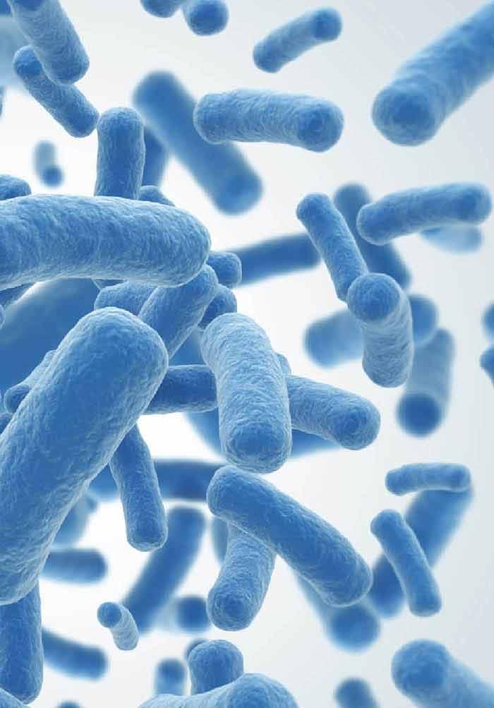 Clostridioides difficile és C. difficile toxin kimutatás   Lab Tests Online-HU