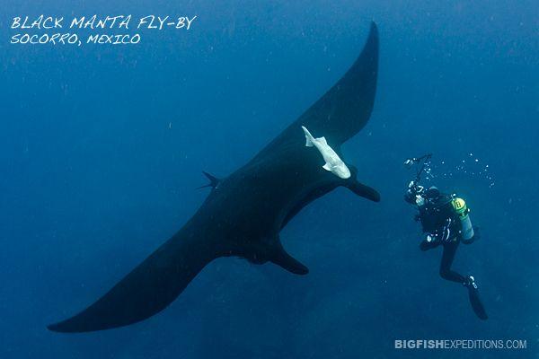bálna zsírégetése)