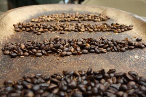 Kávékalmár - Frissen pörkölt kávé