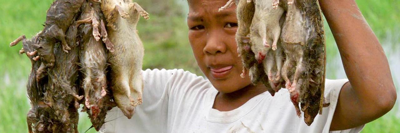 patkány fogyás fogyni fiú