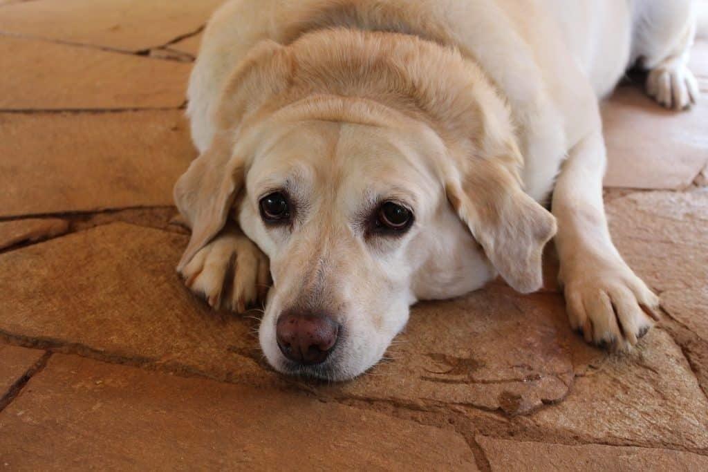 a kutya lecsökkentésének fogyása