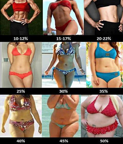 A testzsír százalékos aránya. Kinek, mit és mennyit?