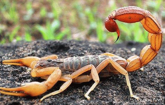 Mint egy skorpió nő fogyni
