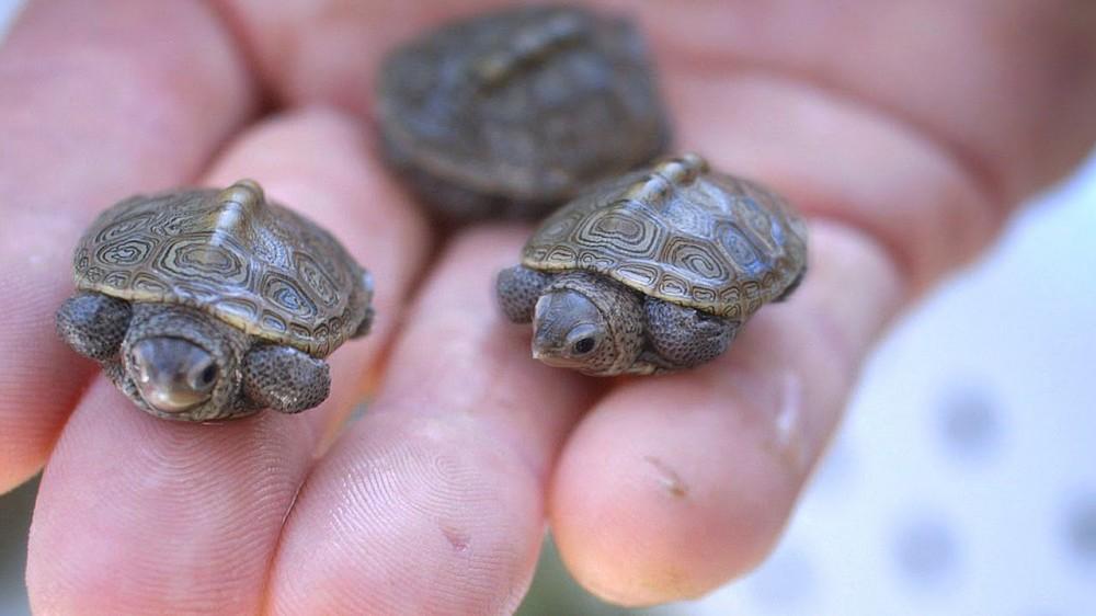hogy a teknős lefogyott