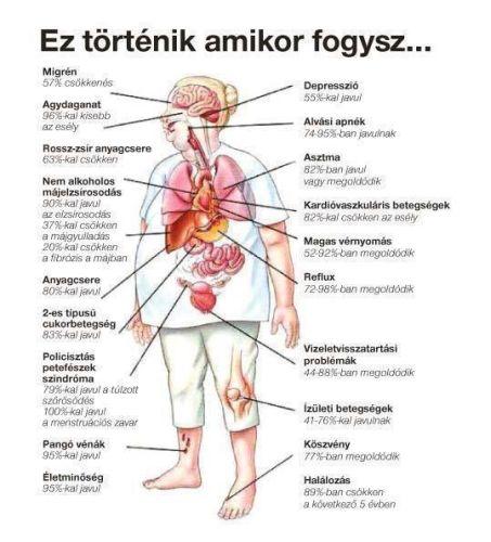 Bakteriális eredetű anyagcsere zavar és elhízás