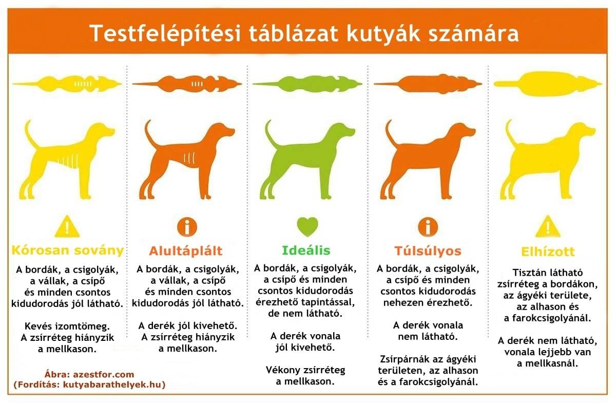 a kutya lecsökkentésének fogyása)