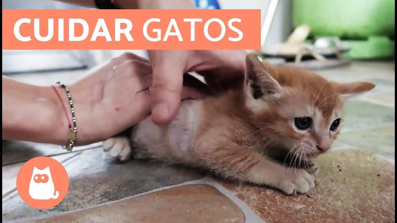 fogyás los gatos