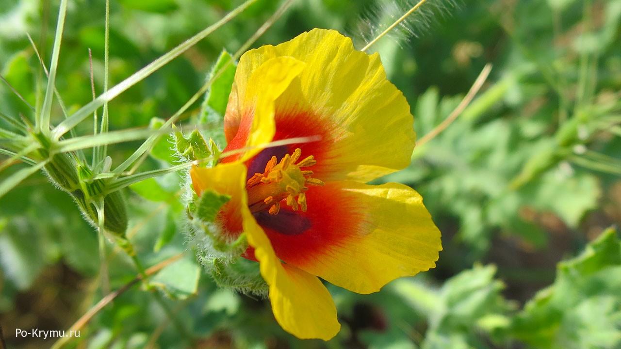 fogyás úgynevezett virágzik)
