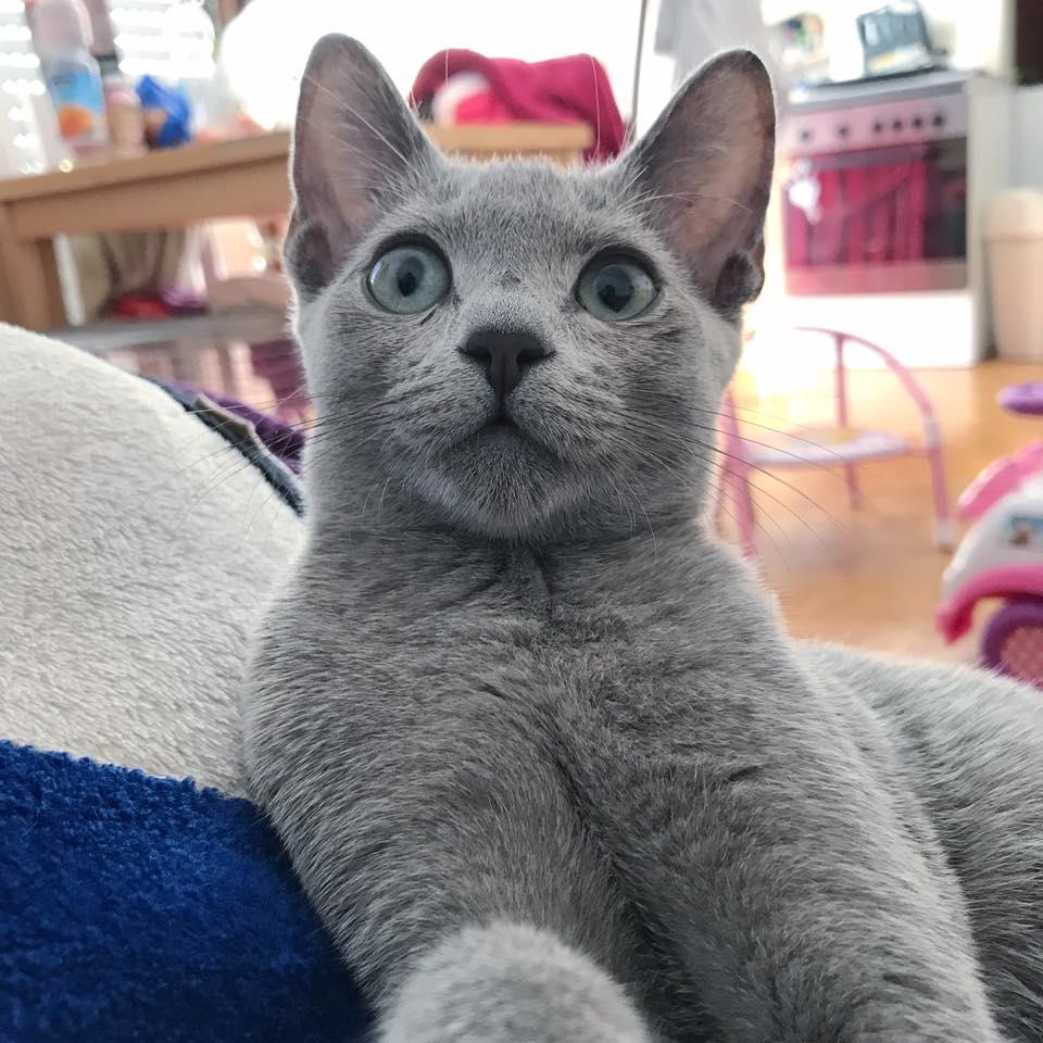 karcsúsító macskák