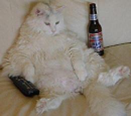 sör jó a fogyáshoz)