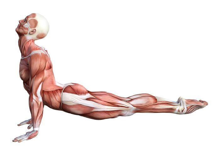 test karcsú tippek
