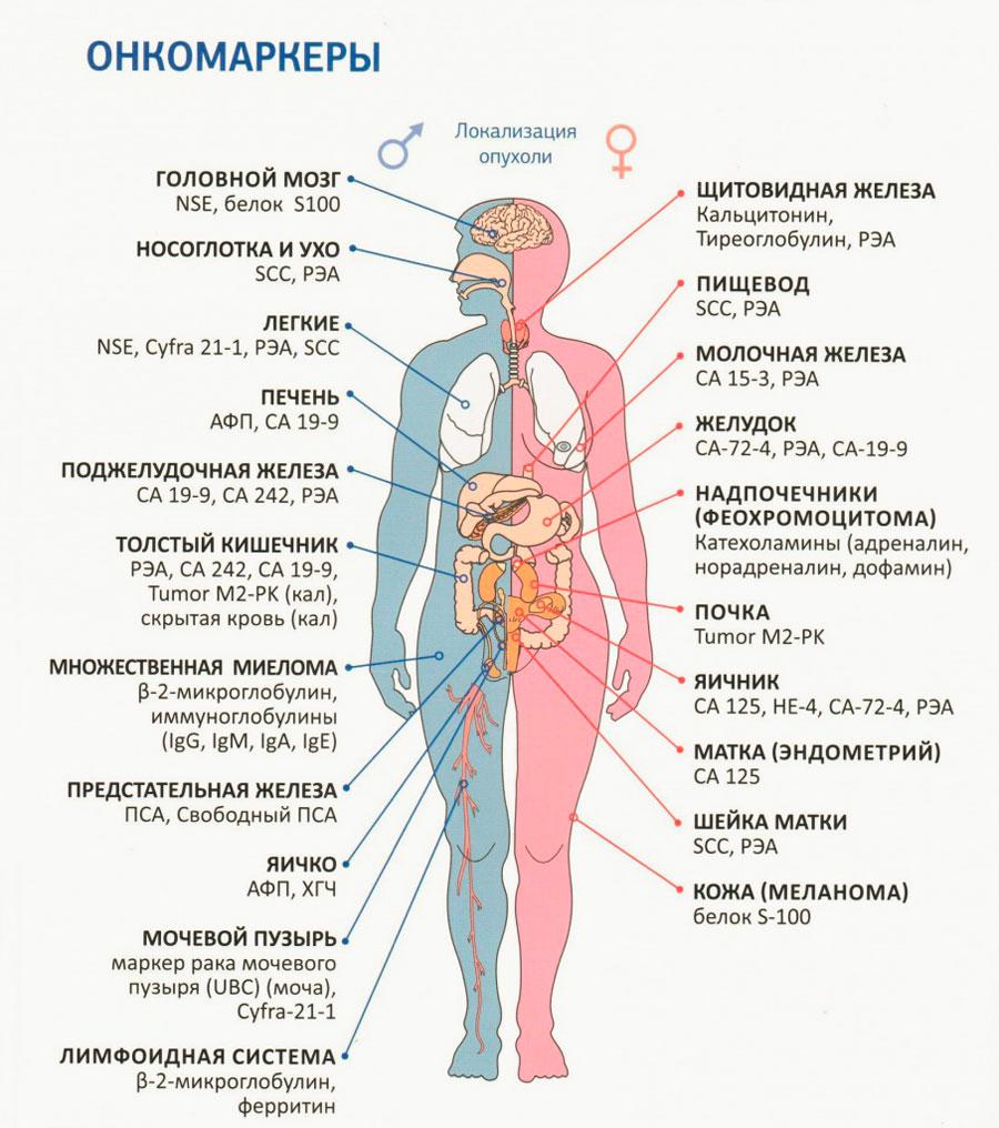 zsírégetés és merevedési rendellenességek gomba kapcsolat a fogyás