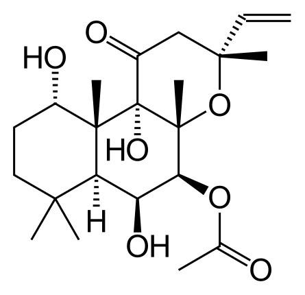 Melyik L-karnitin jobb: folyadék, kapszula vagy por