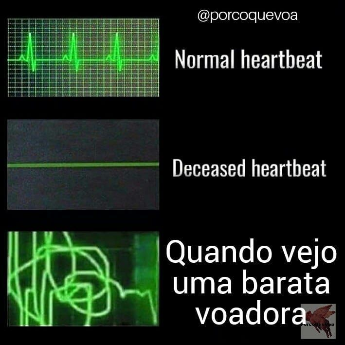 slim down em portugues)