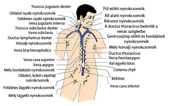 Mit jelezhet a megnagyobbodott nyirokcsomó? | BENU Gyógyszertárak