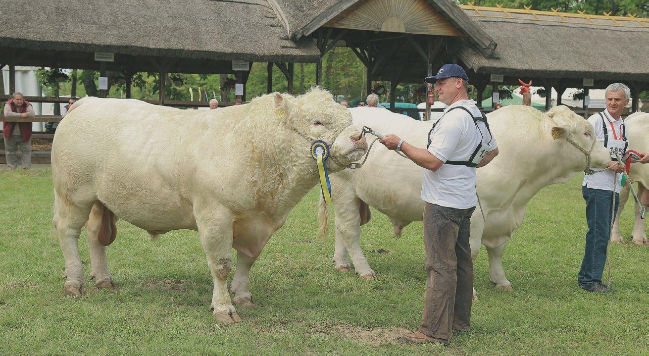 távolítsa el a bárány zsírtartóját)