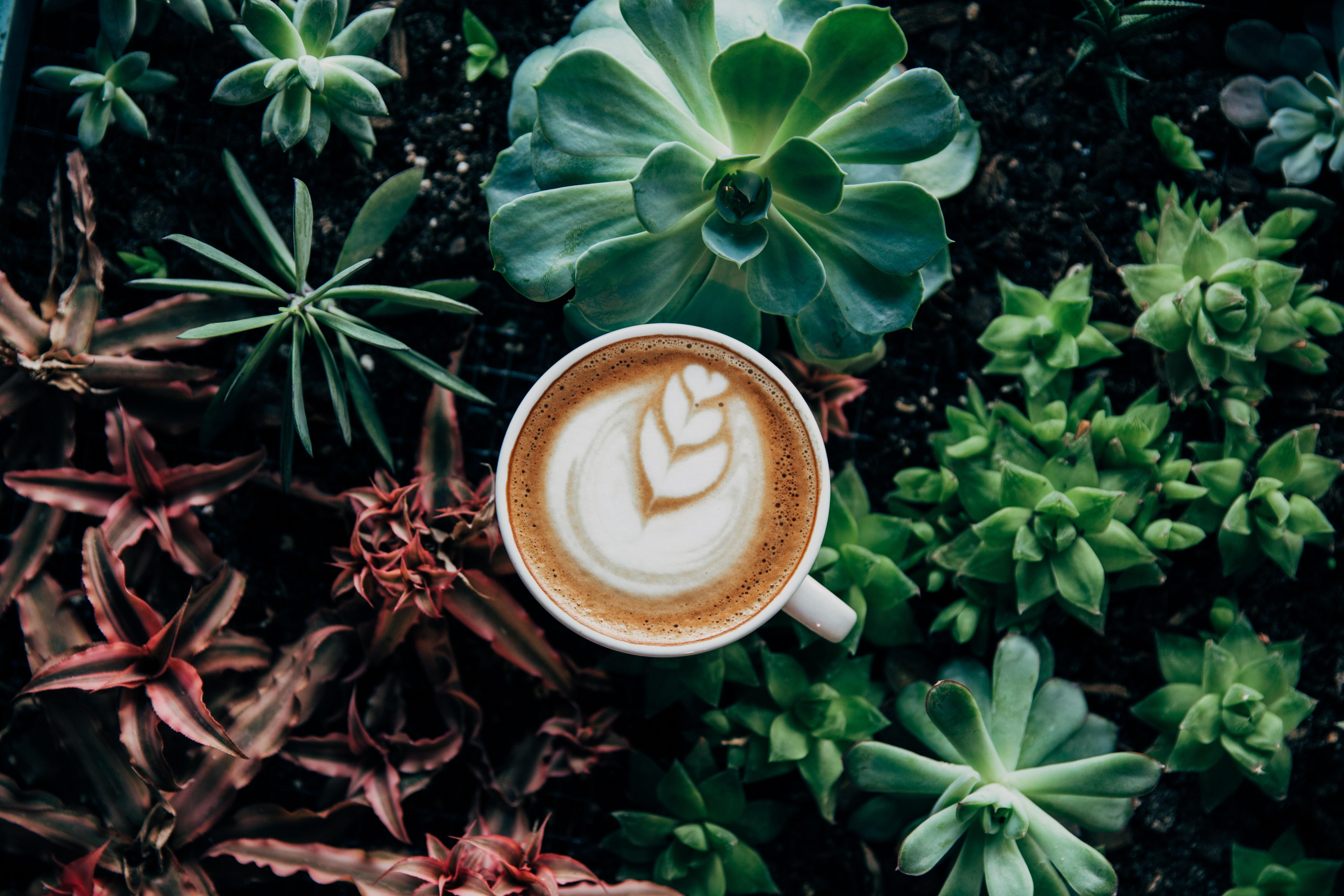 Zöld Kávé (újabb fogyókúrás átverés?) - Index Fórum