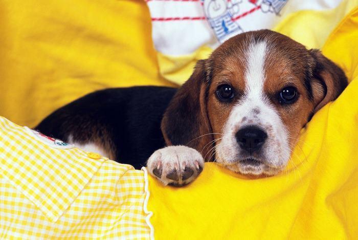 Miért nem eszik a kutyám? Az étvágytalanság lehetséges okai 10 pontban