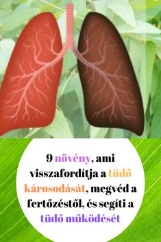 egészséges módon elveszíti a zsírt)