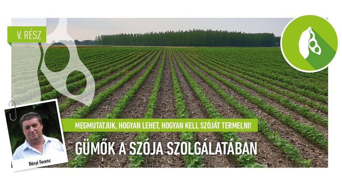 A napraforgó és a szója betakarítása - Agrofórum Online